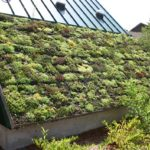 Green Roofs What are They and Why You Should Use Them