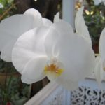 Caring for Your Orchid Care and Management of Pests