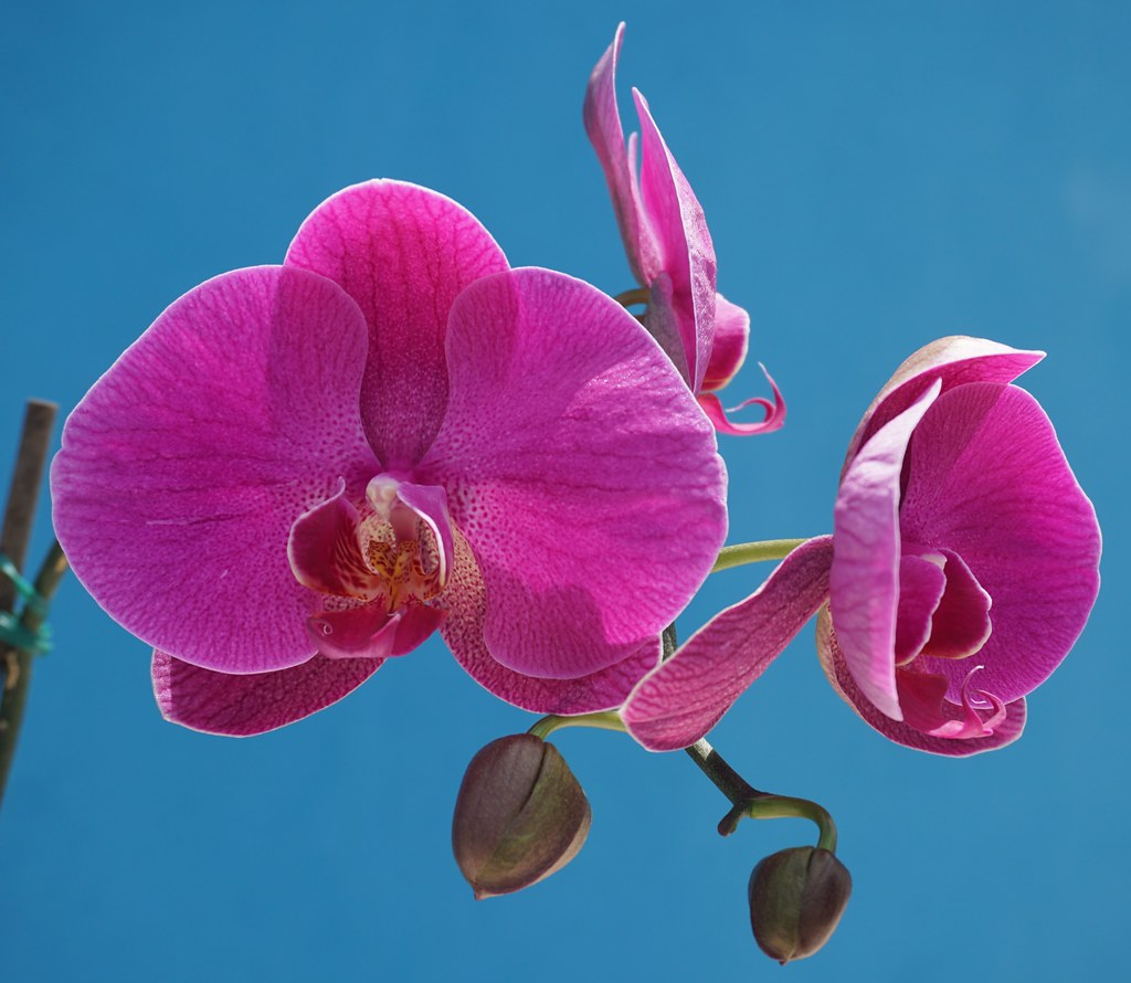 Orchid – The Simple Growing Tips for Everyone   Backyard House Plans Floor Plans