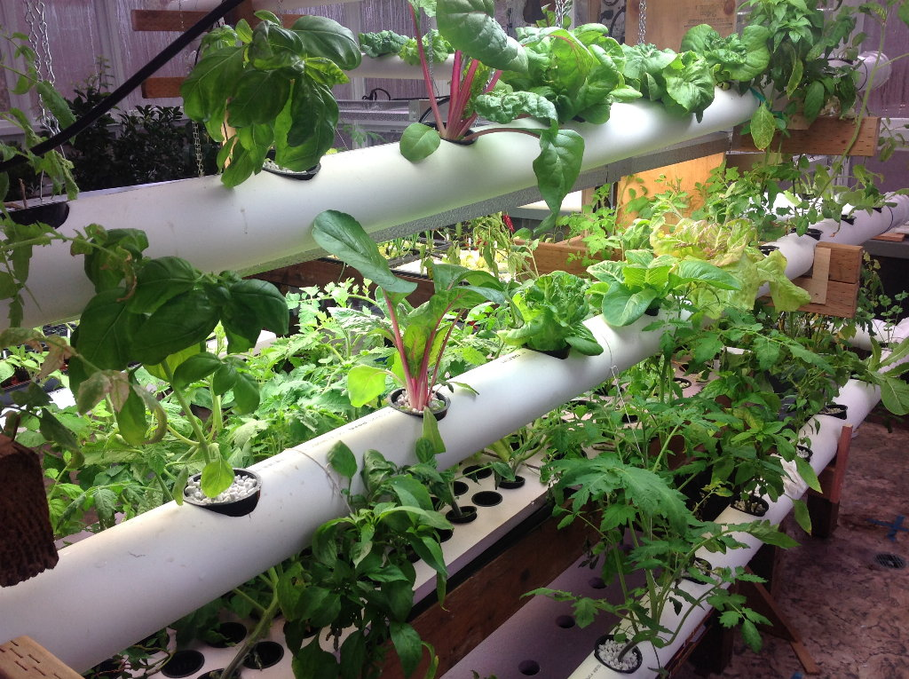 5 Easy Tips to Get a High Yield in Hydroponics Gardening