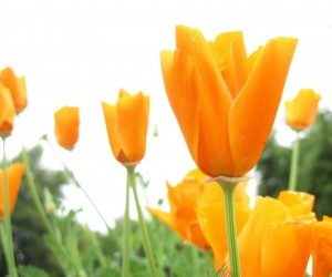 The Benefits of Flowers For Your Backyard and Home