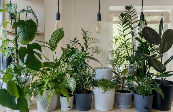 3 Easy Tips Starting an Indoor Garden for Your Home