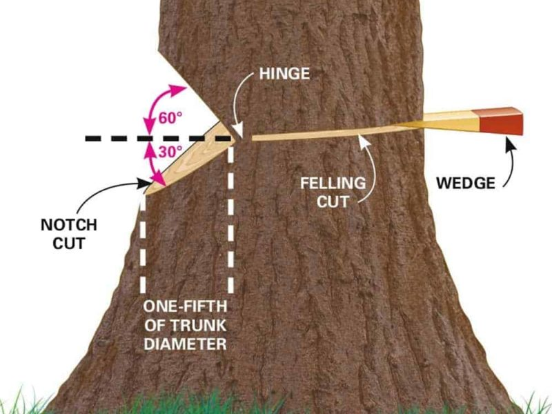 How to Cut a Tree Down Using a Chainsaw Safely and Easily